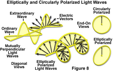 polarized light figure8