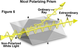 polarized light figure5