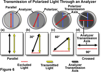 polarized light figure6
